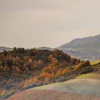 Castelfranci Vigna