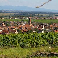 Stentz Colmar